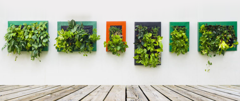Vertical Garden – Smart Way to Add Greenery at Home